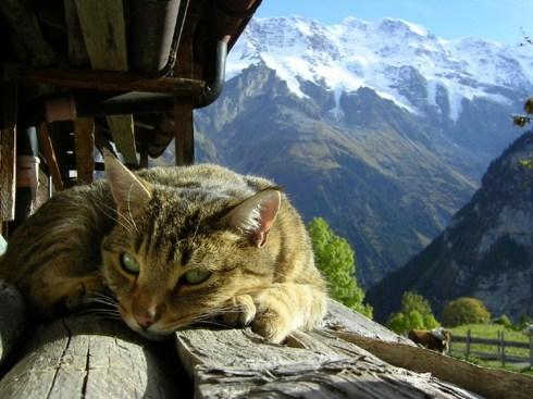 CatsOnSunday1