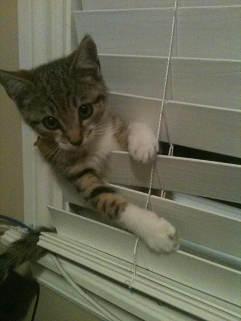 CatsOnSunday11