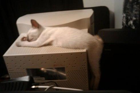 CatsOnSunday14