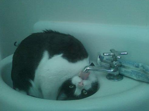 CatsOnSunday5
