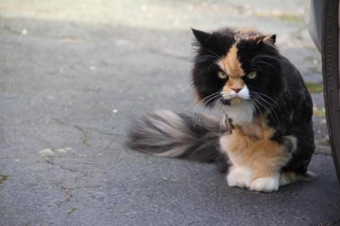 CatsOnSunday8