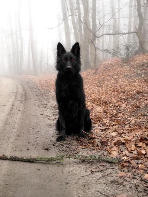 DogsLOL16
