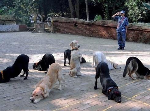 Doggys (21)