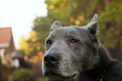 Doggys (43)