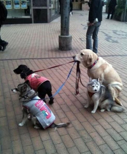 Doggys (7)