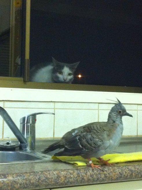 Pics_Cats (1)