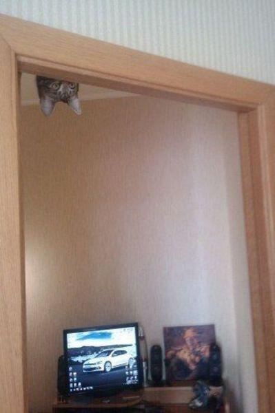 Pics_Cats (10)