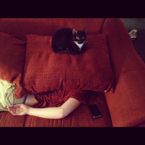 Pics_Cats (13)