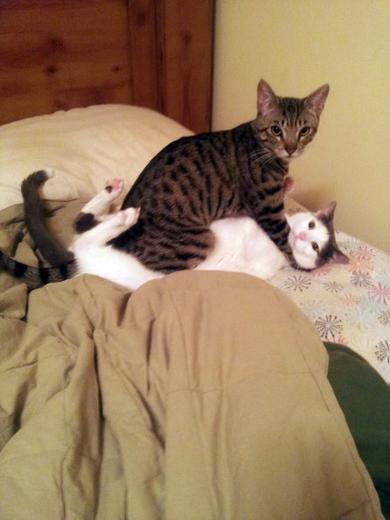 Pics_Cats (20)
