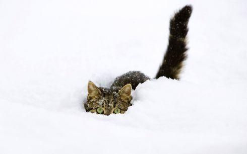 Pics_Cats (23)